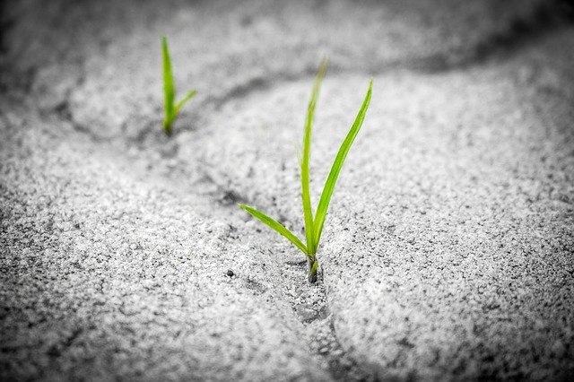 Grass growing out of pavement